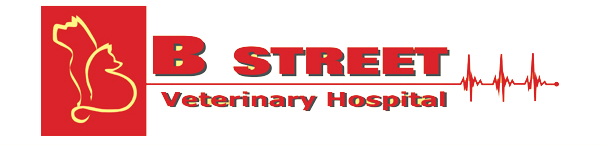 B Street Veterinary Hospital
