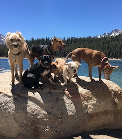 Dogs on the rock